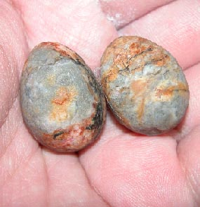 Bezoar Mustika Pearls: PORCUPINE BEZOAR stones mustika pearls.